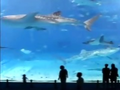 underwater love - screensaver (gato)
